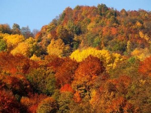 thefreedictionary_ruska_autumn_colors-1200